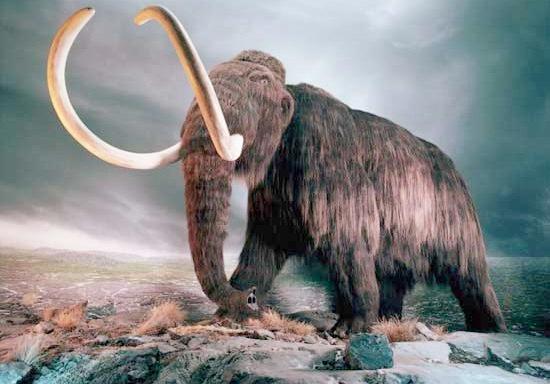 Intentarán clonar  a un mamut