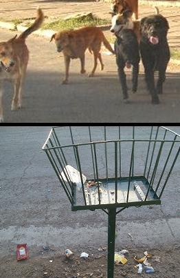 Perros de todos, perros de nadie
