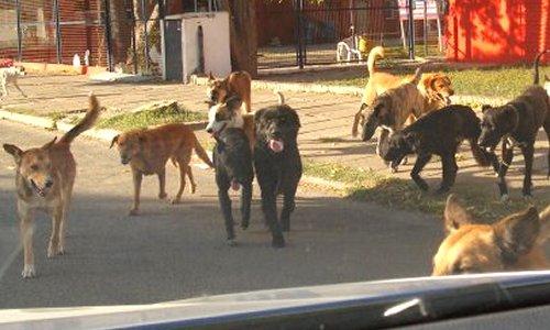 Legislación vigente para mascotas