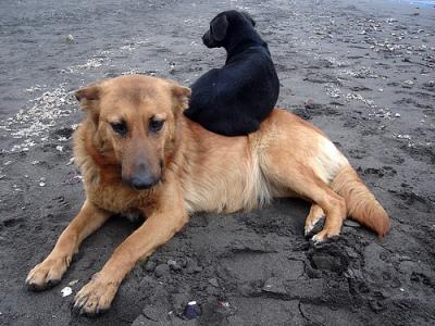 Tenencia responsable de los animales